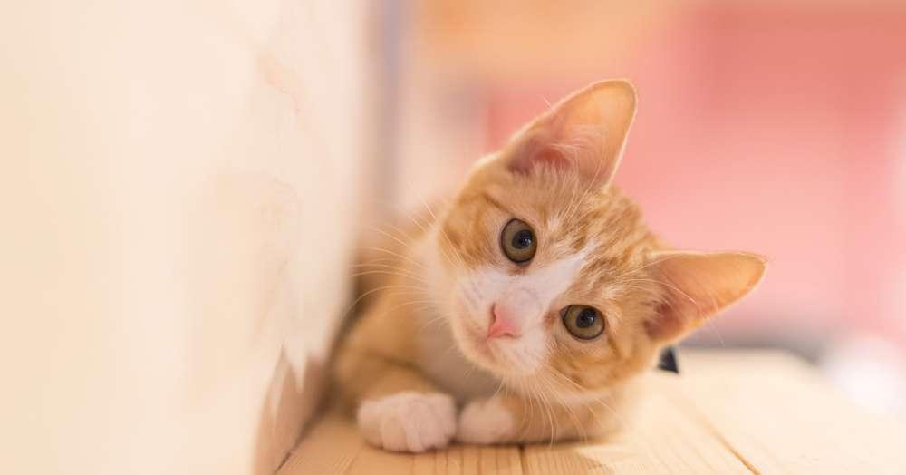 """【猫の日】女性の3人に1人が「猫は""""恋人」⁉ 猫の良いトコTOP3は「癒される」「寄り添ってくれる」「とにかくかわいい」"""