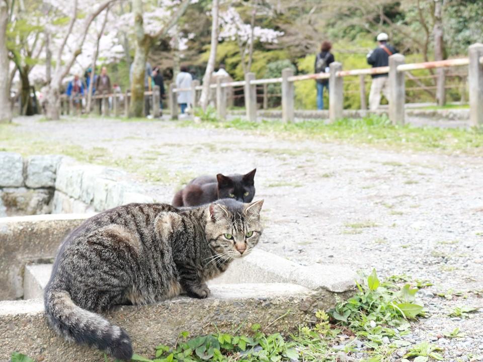 人気観光地の可愛いネコちゃんが登場!「旅猫ロマン 傑作選」第3話・第4話 旅チャンネルで放送