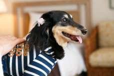 【オークラアカデミアパークホテル】 愛犬とホテルで過ごすリゾートステイ「ドッグフレンドリールーム」提供開始