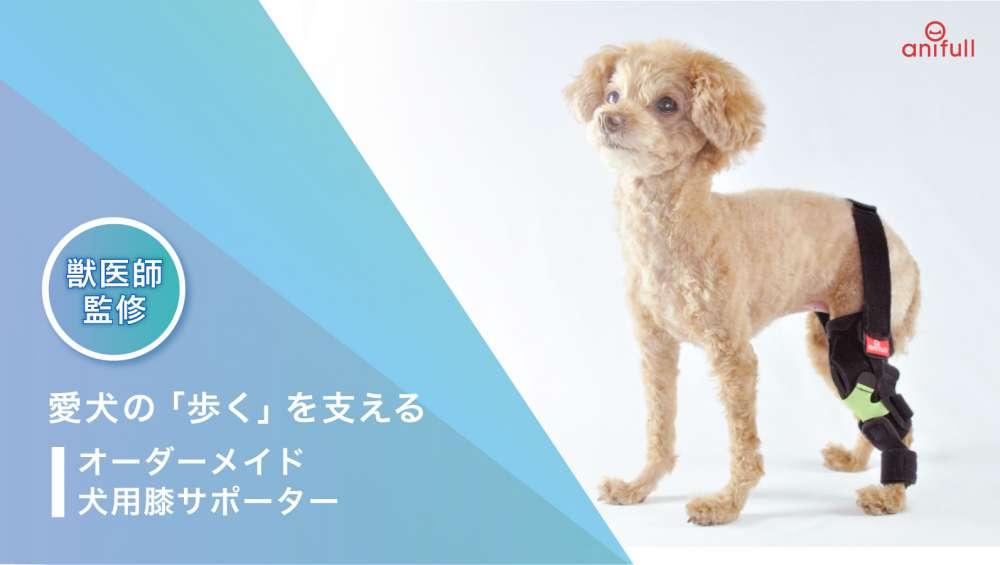 愛犬の「歩く」を支える!世界に一つだけのオーダーメイド犬用膝サポーターを先行予約販売