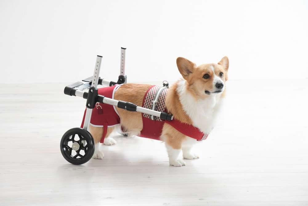 スムーズな歩行をサポートする犬用補助車「ドギーサポーター」のサンプル無料レンタルサービス開始!