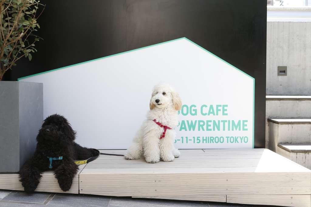 愛犬と寄り添える憩いのドッグカフェ「Dog Cafe Pawrentime」2021年4月17日(土)広尾にオープンが決定。