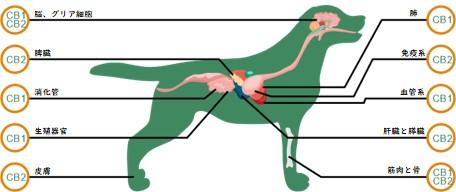 ペットの身体にもある身体調節機能(ECS)
