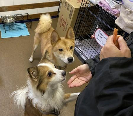 。飼えなくなった犬や猫の保護シェルターを運営するNPO法人「ティアハイム・コクア」