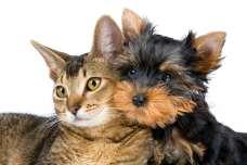 「むぎ」の人気が急上昇!今年は犬・猫共に同じ名前が1位に!ペットの名前ランキング2021~うさぎ・ネズミ・鳥のランキングやキラキラネームも公開~