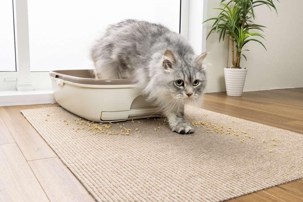 『おくだけ吸着猫のトイレ下敷きマット』